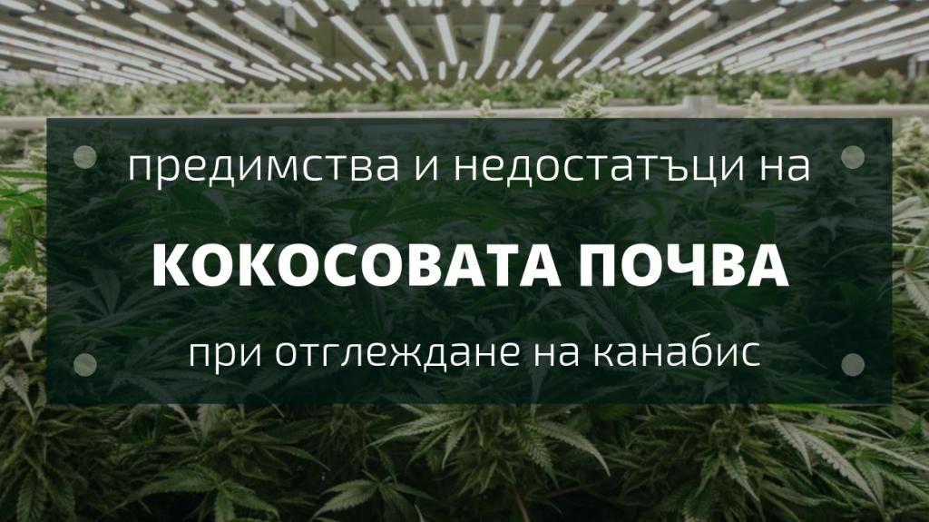 Предимства на кокосовата почва при отглеждане на марихуана